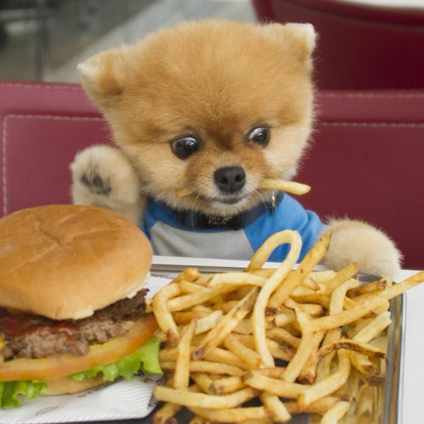 Would you feed Mr Pooch McDonalds, every day?